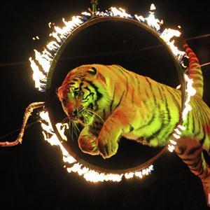 Цирки Кервы