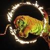 Цирки в Керве